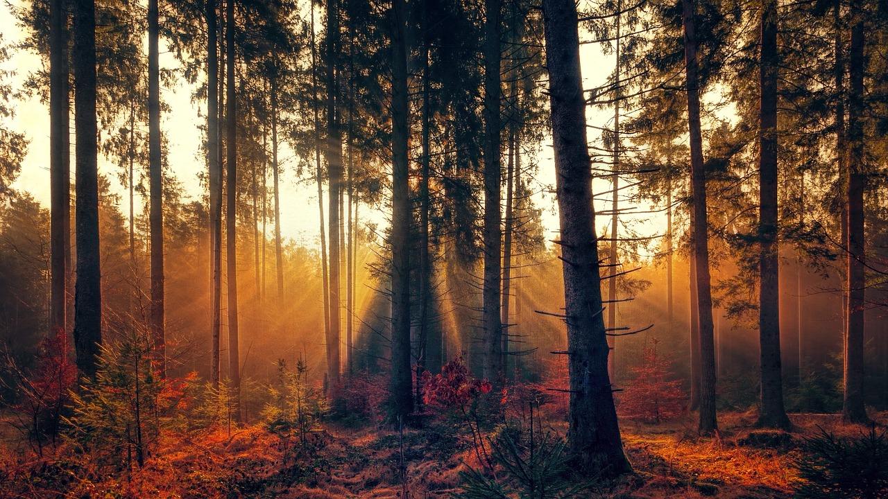 forest-3392077_1280.jpg