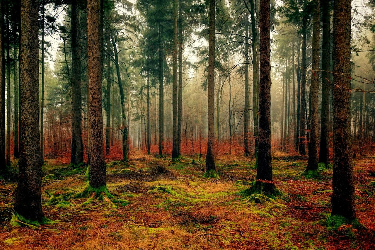 wood-3095720_1280.jpg